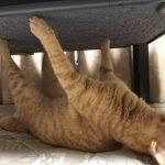 【Twitter】【猫】ネコさん、全部の爪が引っかかり取れなくなってしまい虚無顔になってるしまう(画像あり)