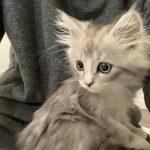 【OG】れいなの猫 増える