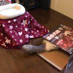【動物系】【画像】ネッコさん、専用のコタツを買ってもらいご満悦