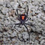 【政治・経済・ニュース系】彡(゚)(゚)「スパイダーマンええなあ…」彡(^)(^)「せや!毒グモに噛まれたろ!」