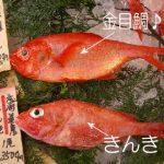 【画像ネタ】【悲報】金目鯛ときんきの見分けが付くVIPPER、ガチで5割もいないwwwwwwwwwwwwwwwwwwwwwwwwwwww