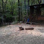 【画像ネタ】【画像】動体を2/3に切断された犬が発見される