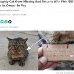 """【動物・いきもの】「あなたの猫に魚を3匹あげました」3日間行方不明だった猫が""""借金""""を抱えて帰宅  [NAMAPO★]"""