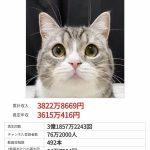 【バカネタ】猫さん、年収3600万円稼いでしまうwww