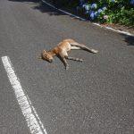 【どうぶつ】道路に馬落ちてたんだが
