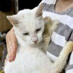 【話題】カラスに襲われていた迷い猫、約2年ぶりに飼い主の元へ帰る  [844481327]