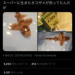 生きたネコザメさん、スーパーで300円で販売中ww