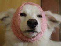 犬にリンゴのネットかぶせたら笑顔消えて草【動物系】