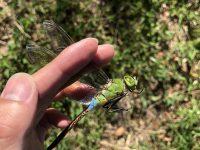 【ニュース全般】【悲報】ゴキブリさん、猛暑で逝く