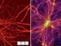 人間の脳細胞と宇宙の画像が酷似しているという事実【オカルト・不思議】