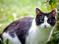 【動物・いきもの】【国際】イングランドの猫、お金を盗み・・・飼い主のもとへ持参    ※写真