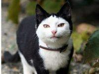 【動物・いきもの】【訃報】「不機嫌ネコ」のグランピー死ぬ、7歳  フェイスブックに850万人フォロワー