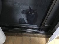 【動物系】ベランダに猫がいるんだが