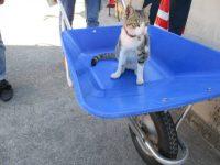 【どうぶつ】僕ドカタ「おいネコ持ってこい」新人ドカタ「はい、持ってきました」