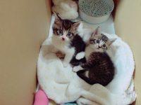 田口夏実、捨て猫を育ててあげる優しいあたしをアピールするブログを更新【こぶしファクトリー】